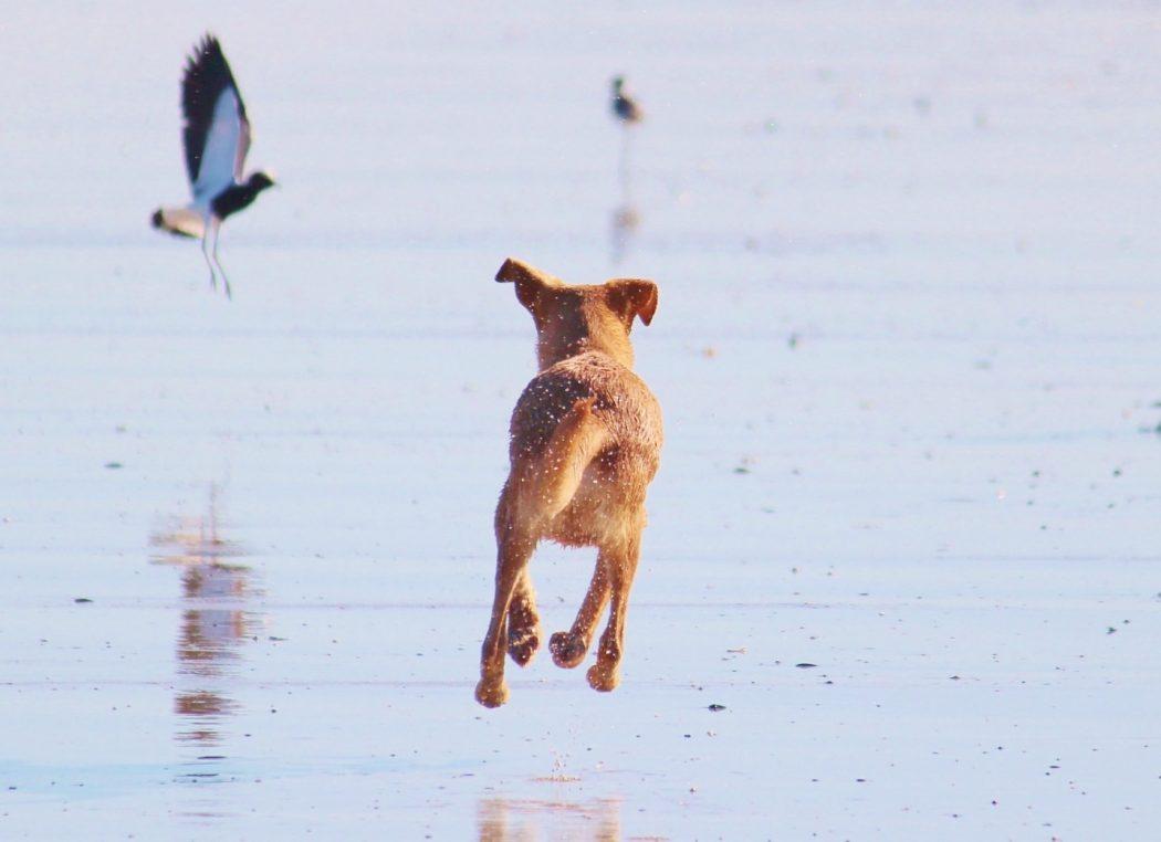 maritimes für den hund
